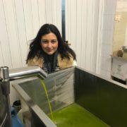Olio extra vergine di oliva Dop Colline Salernitane