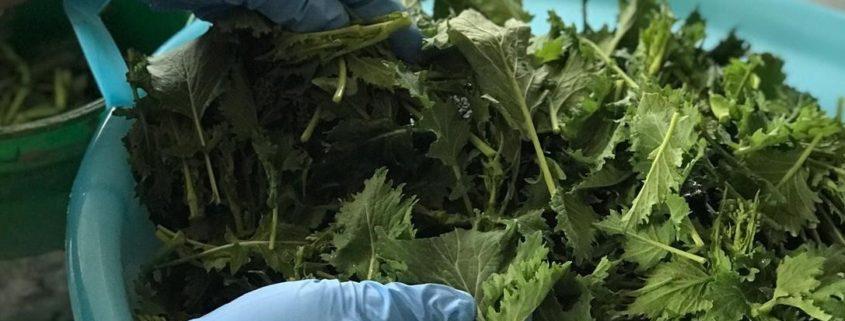 Casa Iourio broccoli selezionati a mano.