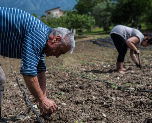 Casa Iuorio piantare pomodoro