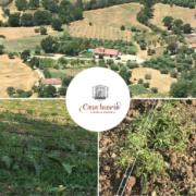 Casa Iuorio agricoltura basso impatto ambientale