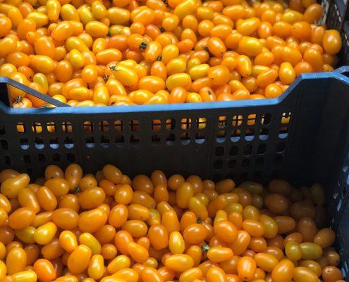 Casa Iuorio pomodorini gialli