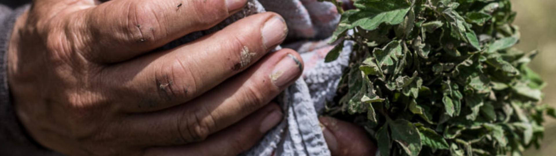 Vegetables seedlings